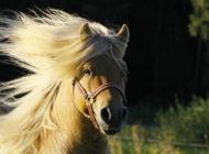 Miksi jokaisen hevosyrittäjän kannattaa miettiä brändin rakentamista