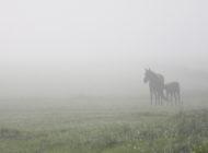 Hevosyritysten muuttuva kysyntä