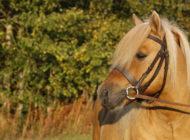 Welfare Quality – sovellettavissa hevosalalle?