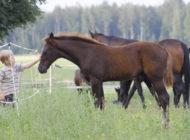 Miten hevosyritys tavoittaa asiakkaat