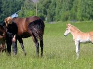 Kasvua hevosalalle yhteisöllisyydestä: somessa tavataan!