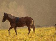 Hevoskasvatus sinnittelee maatalouden muutoksessa
