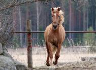 Suomalaiset suhtautuvat hevostalouteen myönteisesti
