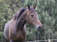 Hevosyrityksen hankintatoimi – lisää kilpailukykyä hankinnoilla