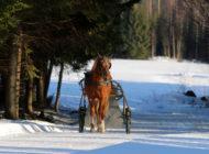 Päätoimisten ja osa-aikaisten yrittäjien rooli suomalaisessa hevostaloudessa