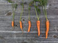 LUO -kehittäjäverkosto vauhdittaa biotalouden innovaatioita Hämeessä