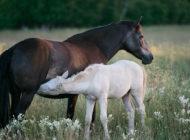 Hevosala työllistää yhtä paljon kuin Lapin matkailu