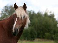 Hevosalan yritykset hakevat kannattavuutta ja kilpailukykyä erilaistamalla palvelujaan