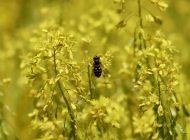 Ekoluksusta luonnonväriaineista