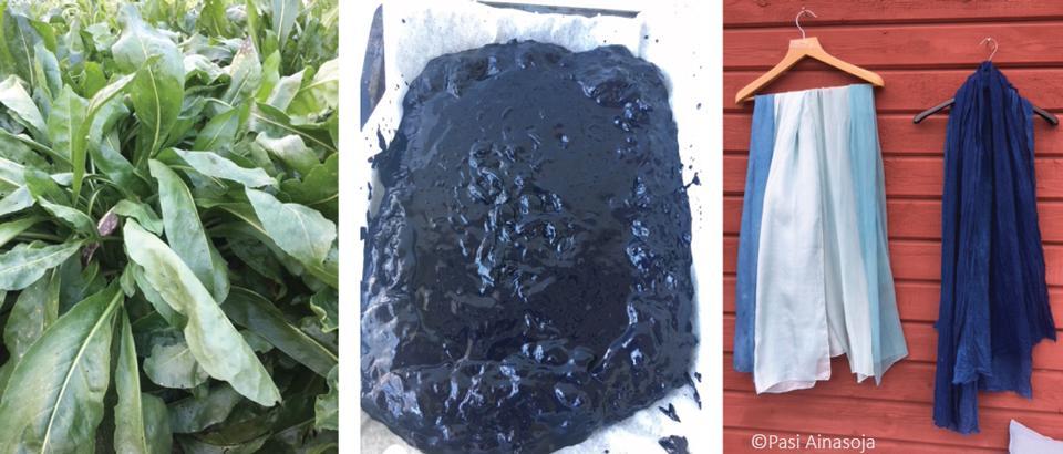 Kuva 1. Indigon esiasteet syntyvät värimorsingon lehdissä, sininen väriaine saostetaan vesiuutteesta kemiallisella käsittelyllä, ja indigolla värjättyjä tekstiilejä.